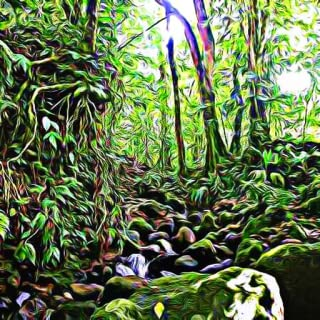 The Rain Forest - Tropic Travel and Exotic Animals and Creature Sounds