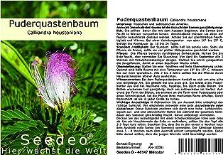 Seedeo® Roter Puderquastenbaum (Caliiandra houstoniana) 20