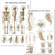 "2 Pack: Skeletal System Anatomy + Disorders of the Spine Poster Set - Set of 2 Anatomical Charts - Laminated - 18"" x 27"""