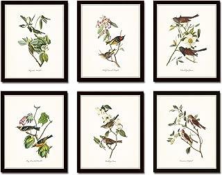 Audubon Birds Print Set No.1 Set of 6 Vintage Bird Prints Home Decor Wall Art - Unframed