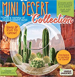 Unique Gardener Grow Your Own Cacti - Desert Terrarium Kit - Just Add Water and Sprout Some Cactus Succulents for The Office Or Home
