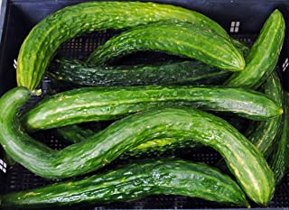 David's Garden Seeds Cucumber Asian Suyo Long SL3333 (Green) 50 Non-GMO, Heirloom Seeds