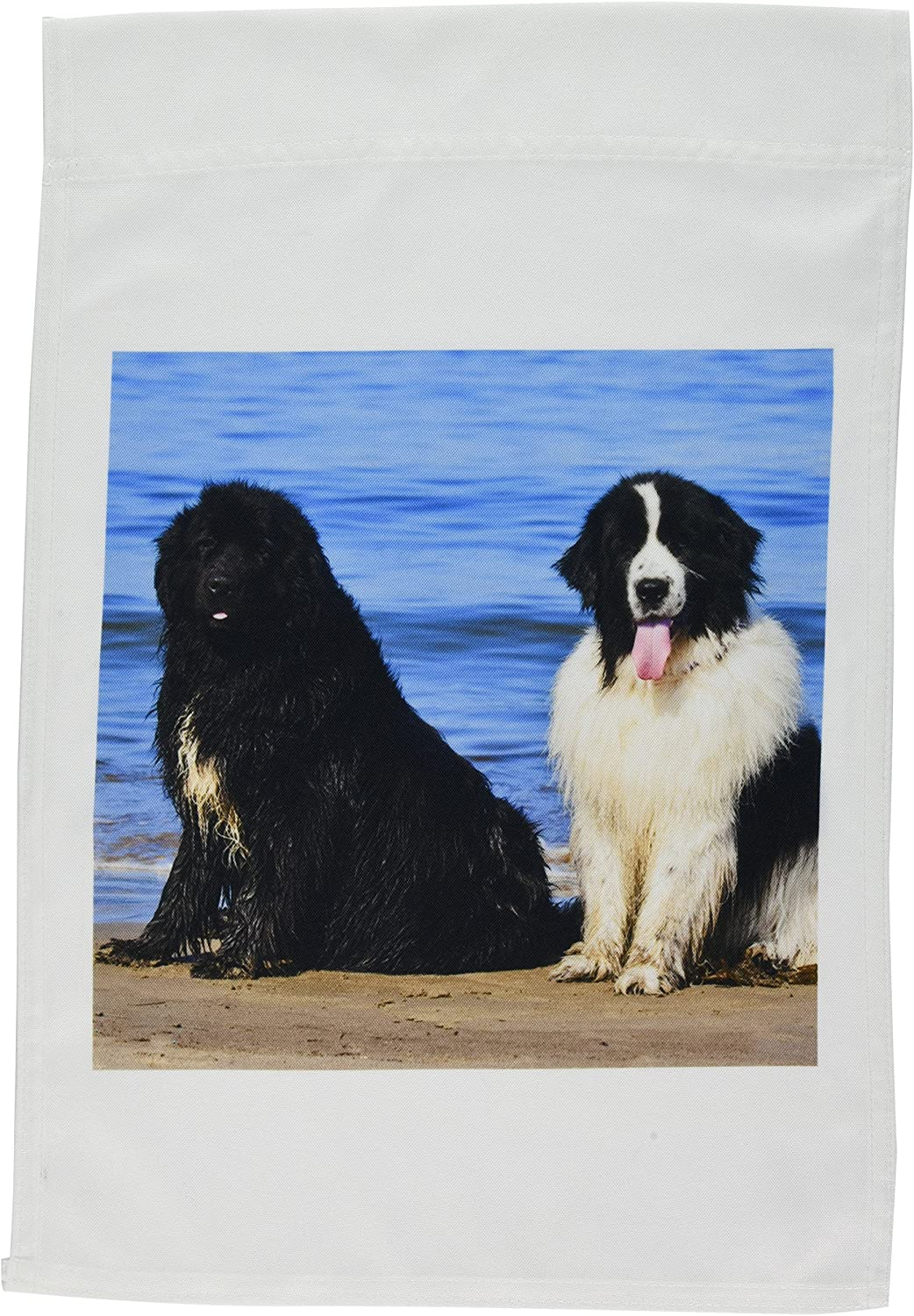 3dRose fl_192297_1 Usa, California. Newfoundlands Sitting by The Ocean Looking at You. Garden Flag, 12 by 18-Inch