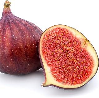 CERRETTO cuttings 5  fresh Biggest fruit fig variety