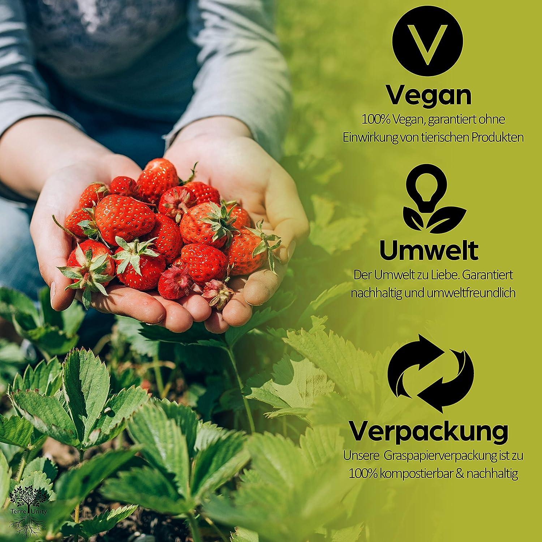Garten Erdbeere Samen f/ür Obstgarten zum Anpflanzen Obst Garten Seeds 50 x Erdbeeren Bio Saatgut f/ür Balkon Hochbeet /& Gew/ächshaus TerreUnity Erdbeersamen Saat mit Anwenderst/äbchen