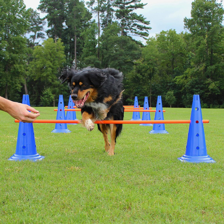 Lord Anson Trade; Dog Agility Hurdle Canine Set Colorado Springs Mall Cone Sale price - T