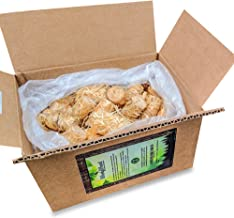 WoolyWood Charcoal Starters for Green Eggs, Kamados and Primo Smokers - Super Fast Lighting, 100% All Natural (72 Count)