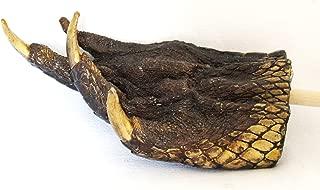 Large Gator Alligator Claw Paw Back Scratcher on Stick New Orleans Louisianna Cajun Creole Voodoo Magic Amulet Potion Bayou Genuine
