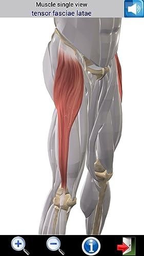『Visual Muscles 3D』の5枚目の画像