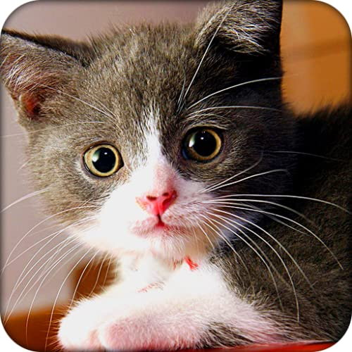 Gatos Preciosos Tema