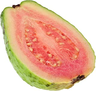 Best strawberry guava tree pictures Reviews