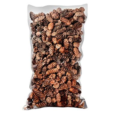 Super Moss (24512) Black Spruce Pine Cones, 19-Ounce, Brown