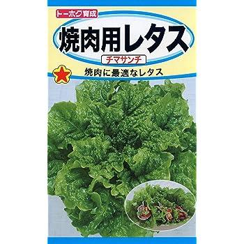 株式会社トーホク 焼肉用レタス チマサンチ 03343