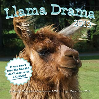 picture of llama face
