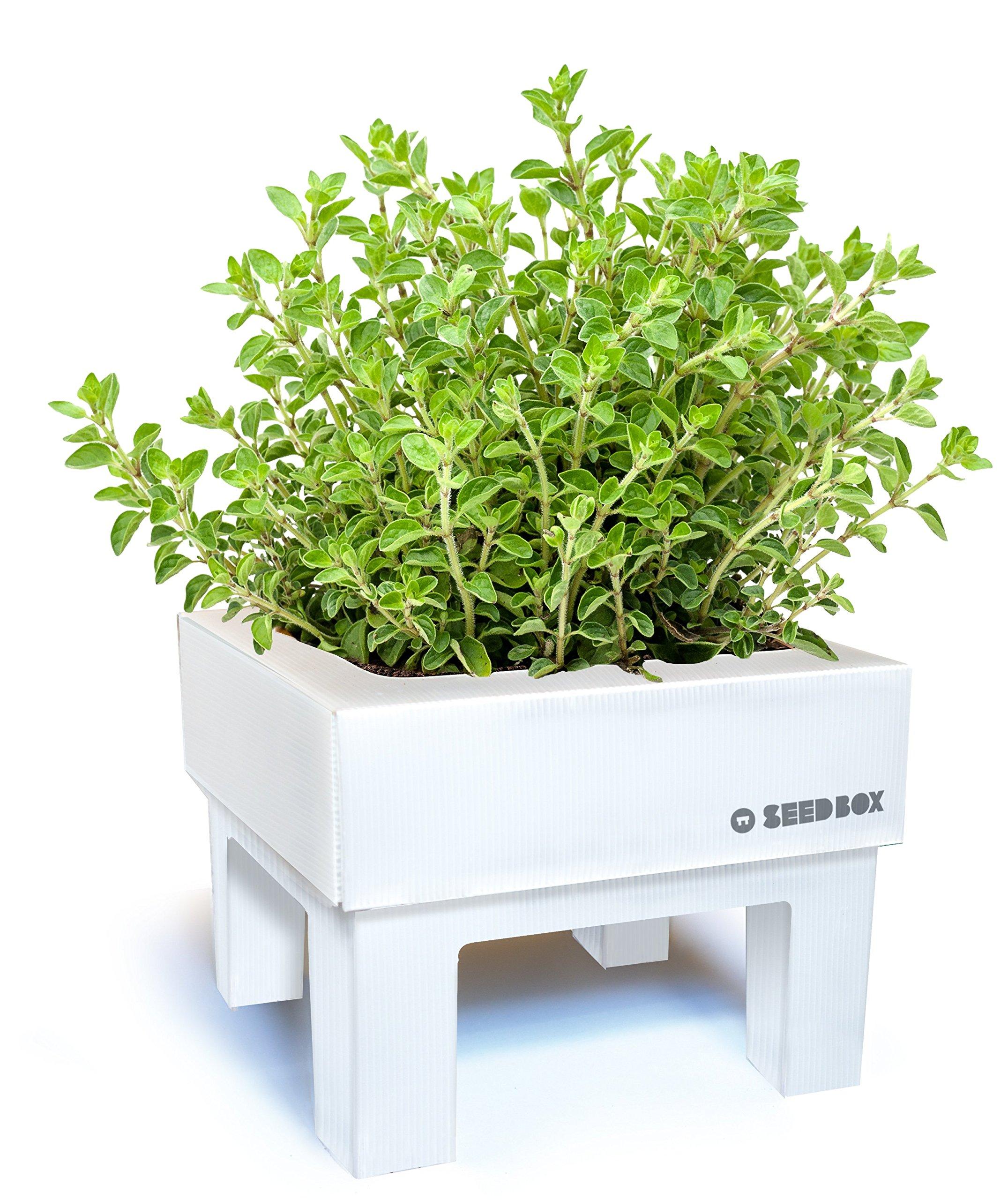 SeedBox SBCUOR-Oregano: Amazon.es: Jardín
