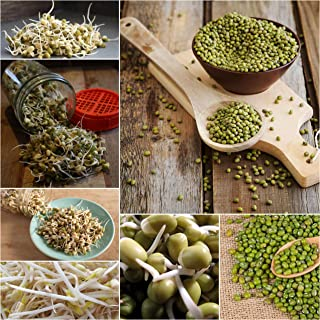 Mung Bean Sprouting Seeds 200g-2kg UNTREATED Sprout Micro Green Sprouts Easy Veg (200g)