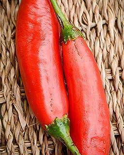 Sherwoods Seeds Aji Colorado Peruvian Heirloom Pepper Premium Seed Packet