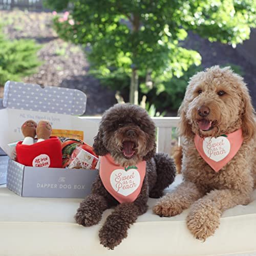 The Dapper Dog Box - Curated Fun Themed Dog Toys