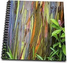 3dRose db_259259_1 الولايات المتحدة الأمريكية، هاواي، ماوي، قوس قزح حذاء رسم شجرة الأوكالبتوس، 8 × 8، شفاف