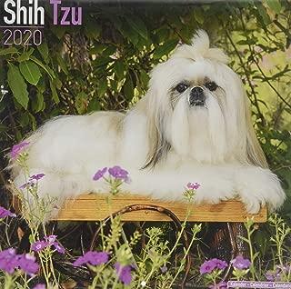 Shih Tzu Calendar - Dog Breed Calendars - 2019 - 2020 Wall Calendars - 16 Month by Avonside (Multilingual Edition)