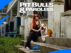 Pit Bulls and Parolees Season 13