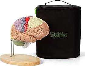 مدل مغز انسان (شماره دار) با کیف حمل - مدل آناتومی با اندازه 2 برابر زندگی توسط Geekidoc