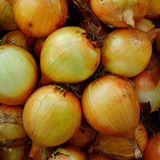 Sponsored Ad - Sweet Spanish Onion - 50 Seeds