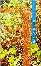 Los Hechos de Jesús de Nazaret: Una armonía cronológica de los evangelios (Spanish Edition)