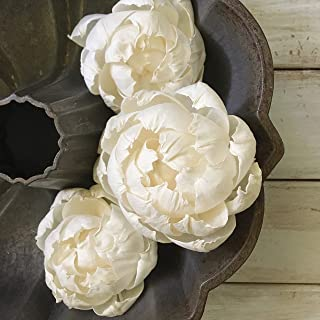 Oh You're Lovely Peony Sola Wood Flower 3 inch
