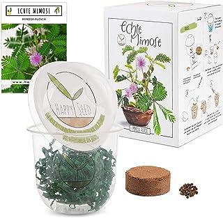 GROW2GO Mimosa Pudica Starter Kit de cultivo - Mini Invernadero, semillas de Mimosa y juego de plantación de tierra - idea...