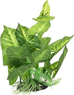 Fluval Anubias Plant for Aquarium, 9-Inch