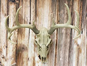 large stag head wall mount