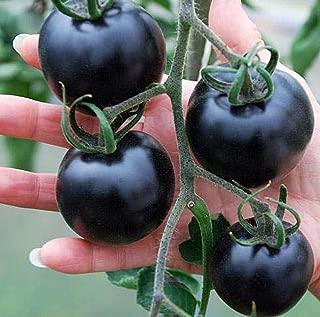 Best black tomato price Reviews