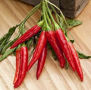 Poinsettia Heirloom Pepper Premium Seed Packet + More
