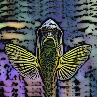 Exotic Fish Canvas Painting Art Galley Wallpapers