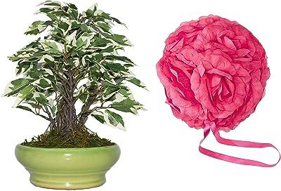 Fourwalls Artificial Ficus Bonsai Plant in a Ceramic Vase (29 cm Tall, Green/White) + Artificial Fabric Kissing Pomander Flowers Ball (15 cm x 15 cm x 15 cm, Dark Pink)