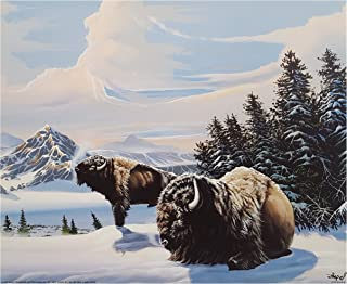 ImpactInt Buffalos by Gary Ampel 16x20 Poster (Print Only)