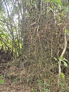 Best indian thorny bamboo Reviews