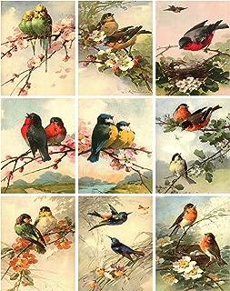 Catherine Klein Vintage Victorian Birds Collage Sheet 8.5 x 11
