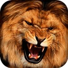 African Lion Simulator 3D   African Hunting Jungle Adventure Survival Evolution Lion Simulator 3D