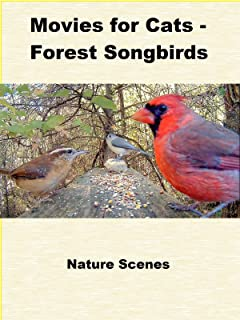 Movies for Cats - Forest Songbirds