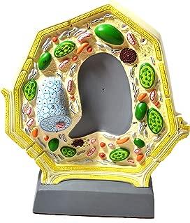 Best chloroplast model 3d Reviews