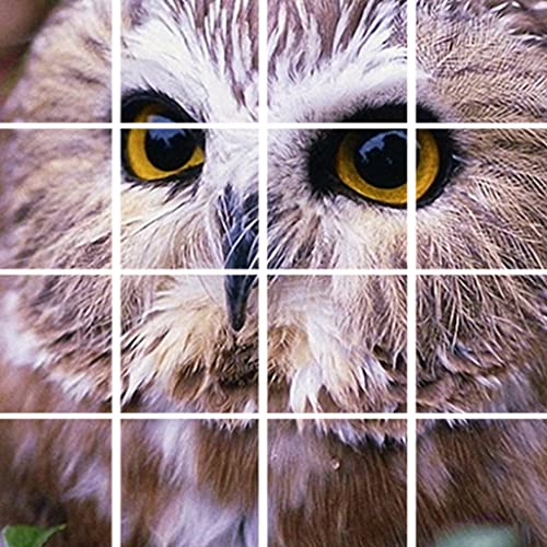 Cute Owl Pictures-Lovely Owls Animal Puzzle Game