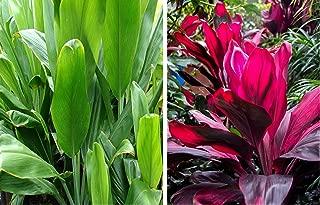 Red & Green Hawaiian