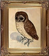 لوحة زيتية مؤطرة La Pastiche البومة الصغيرة، مقاس 86.36 سم × 76.2 سم، متعددة الألوان