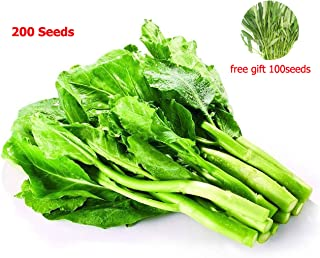 Chinese Broccoli 200Seeds+Green Vegetable 100Seeds,Chinese Kale Organic 100% Garden Vegetable Seeds for Planting Easy Growth