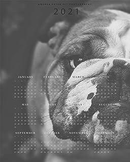 Bulldog Inglese Cane Calendario 2021 Parete Arte Stampa Regali Per Mamma Bulldog, Poster Calendario Foto Cane Carino, Cale...