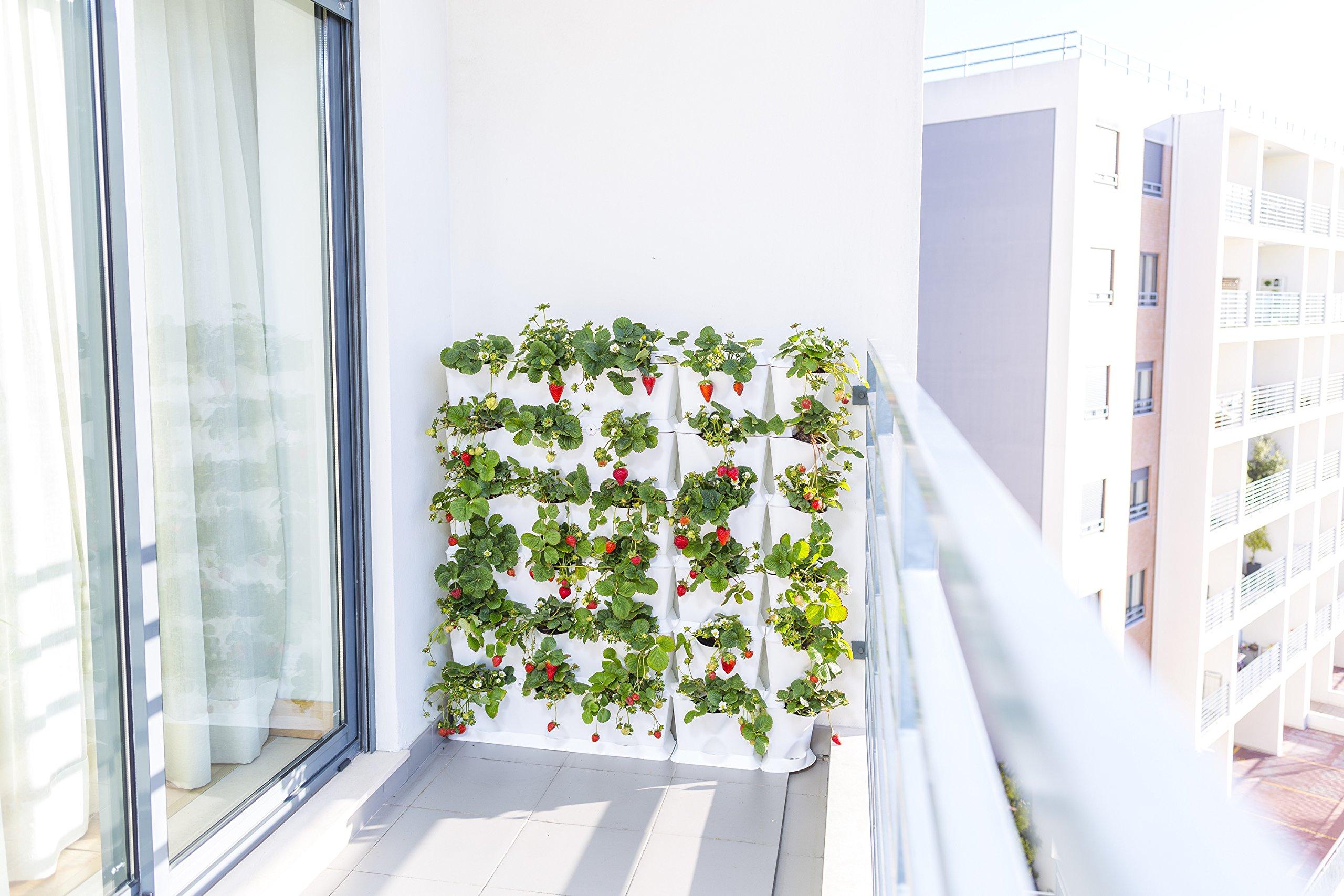 minigarden 1 Juego One para 3 Plantas, Jardín Vertical Modular y ...
