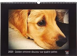 Golden retriever douceur sur quatre pattes 2020 - Édition noire - Calendrier mural Timokrates, calendrier photo, calendrier photo - DIN A3 (42 x 30 cm)