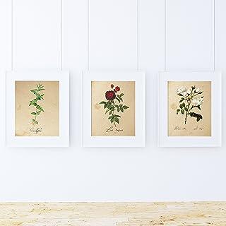 Pack Feuille MEDITERRANEO. Trois Feuilles A4. Les Affiches avec des Photos de la botanique. Décoration d'intérieur. Feuill...